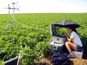 Former graduate student Mary Capiral monitoring nitrous oxide emissions in a potato field.